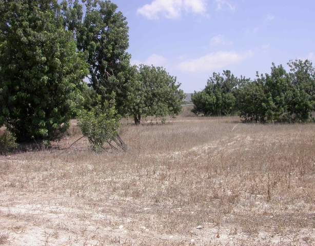 Plot in the Limassol district